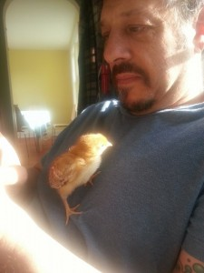 This was our baby Omelet. He is our sweetest chicken.